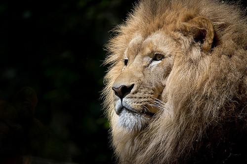 百獣の王に学ぶ、人を喜ばせることこそが価値